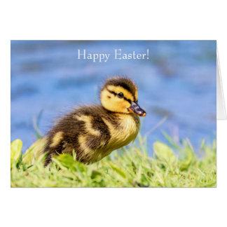 Mallard Duckling Card