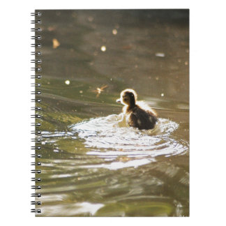 Mallard Ducklings Note Book