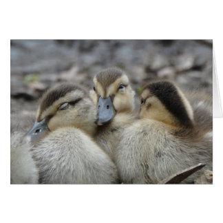 Mallard Ducklings Snuggling! Card