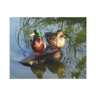 Mallard Ducks #2 Canvas