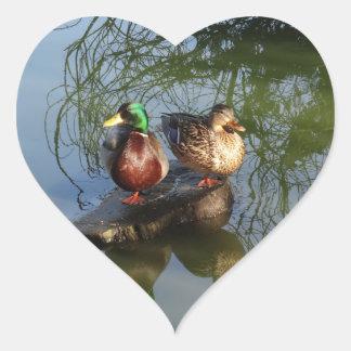 Mallard Ducks #2 Stickers