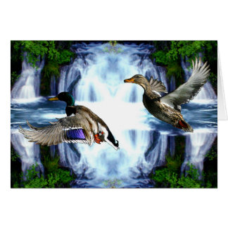 Mallard ducks card