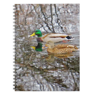 Mallard Ducks Notebooks
