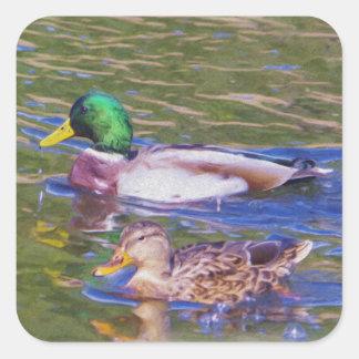 Mallard Ducks Square Sticker