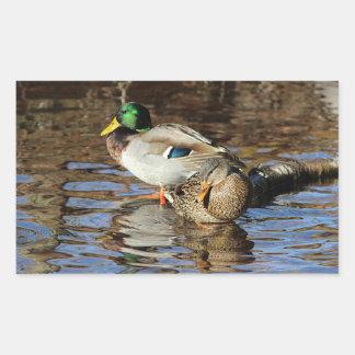 Mallard ducks sticker