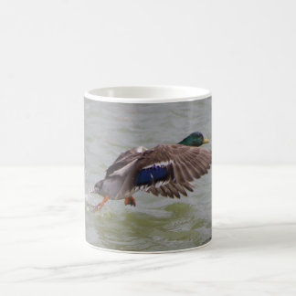 mallard in flight coffee mug