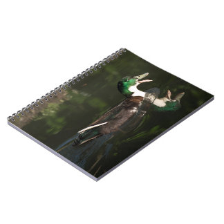 Mallard Note Books