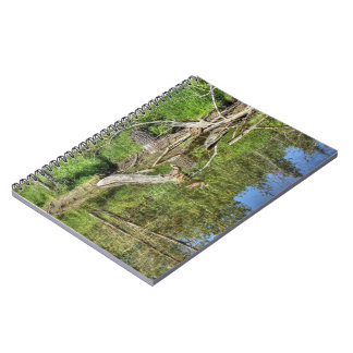 Mallard on Pond Note Books