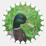 Mallard Stickers