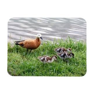 Mallard with chicks photo rectangular photo magnet
