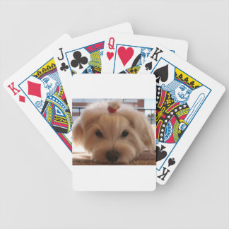 maltese 3 bicycle playing cards