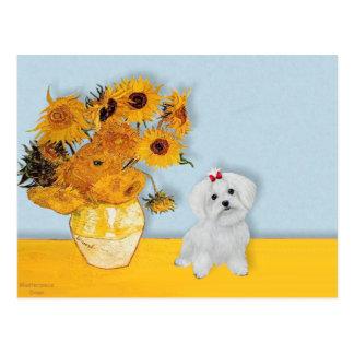 Maltese 8 pup - Sunflowers Postcard