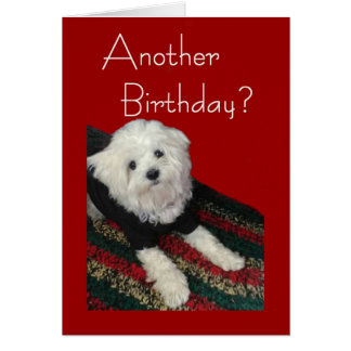 Maltese Birthday Wishes for Anyone Card