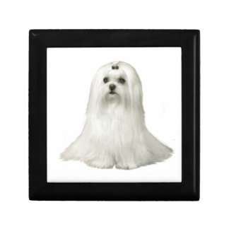 Maltese (C) - show dog Gift Box