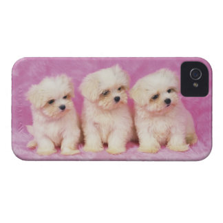 Maltese Dog; is a small breed of white dog iPhone 4 Case-Mate Case