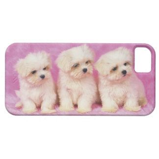 Maltese Dog; is a small breed of white dog that iPhone 5 Case