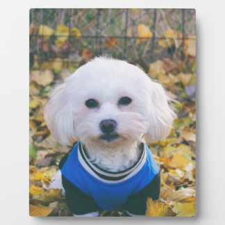 maltese-dog plaque