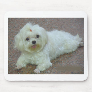maltese laying mouse pad