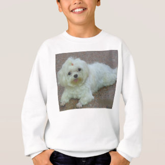 maltese laying sweatshirt