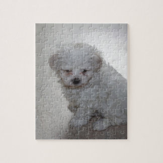 maltese pup jigsaw puzzle
