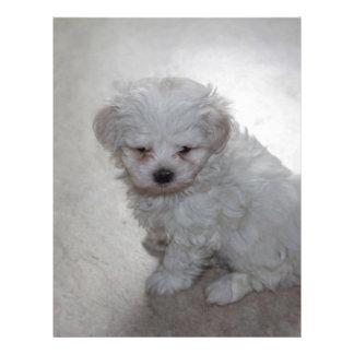 maltese pup letterhead