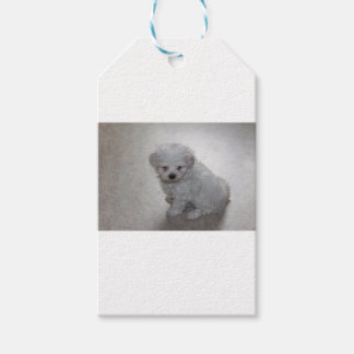 maltese pup pack of gift tags