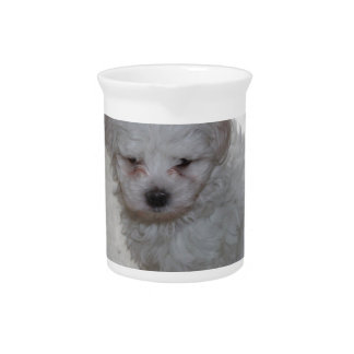 maltese pup pitcher