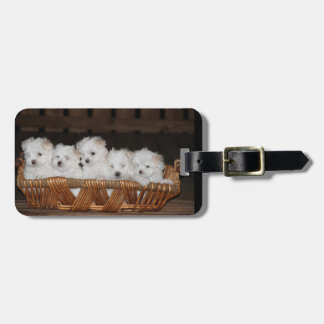 "Maltese, Puppies, Basket, ""Five Puppies"", White Luggage Tag"