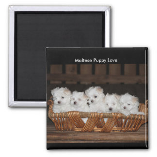 "Maltese Puppies, Basket, ""Maltese Puppy Love"" Magnet"