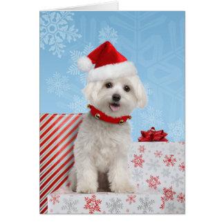 Maltese Puppy Christmas Card