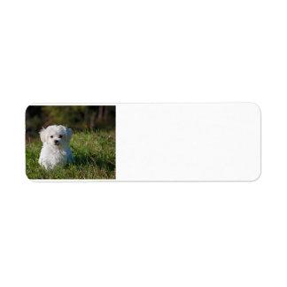 maltese puppy in grass