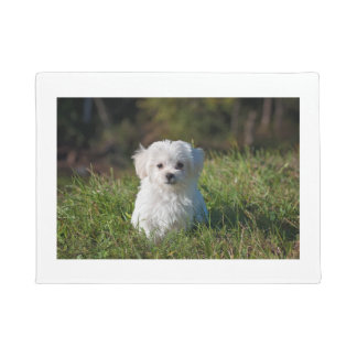 maltese puppy in grass doormat