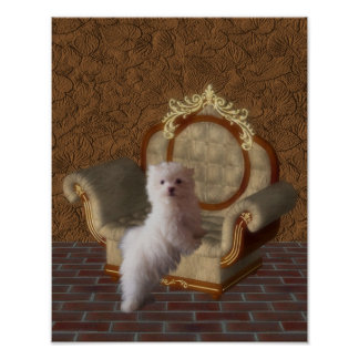 Maltese Puppy On Chair Dog Poster