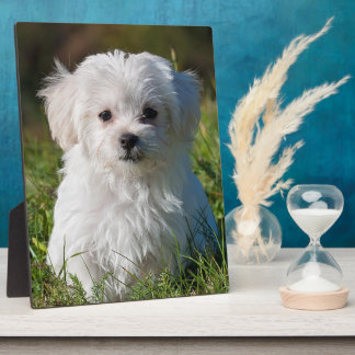 Maltese puppy plaque