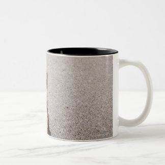 Maltese, Yorkshire terrier mix. Alberta, Canada Two-Tone Coffee Mug