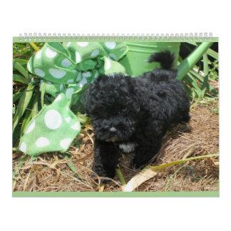 Maltipoo Maltese Puppy Calendar