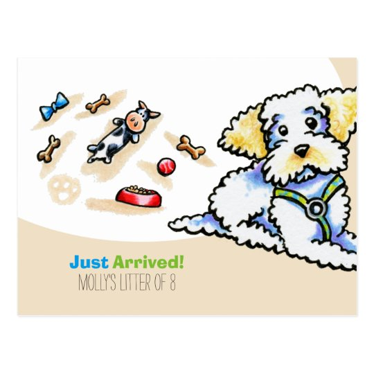 Maltipoo Mixed Breed New Puppy Social Postcard