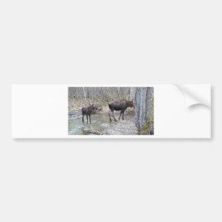 Mama and Baby Moose Bumper Sticker