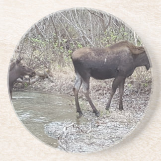 Mama and Baby Moose Drink Coasters