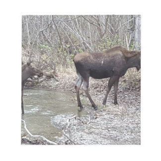 Mama and Baby Moose Notepad