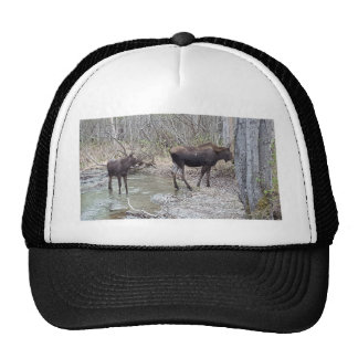 Mama and Baby Moose Trucker Hat
