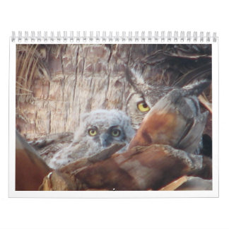 Mama And Baby Owls In A Palm Tree Calendars