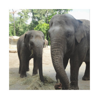 Mama & Baby Elephant Canvas Print