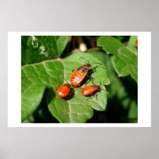 Mama Bug and Baby Bugs Poster
