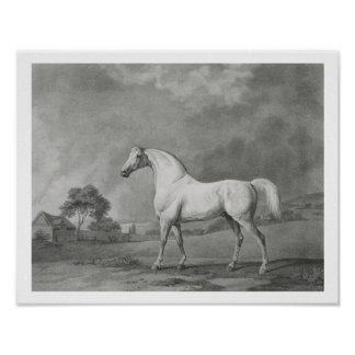 Mambrino, engraved by George Townley Stubbs (1756- Poster