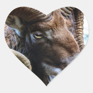 Mammal Nature Animal World Animal Mouflon Heart Sticker