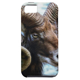 Mammal Nature Animal World Animal Mouflon iPhone 5 Case