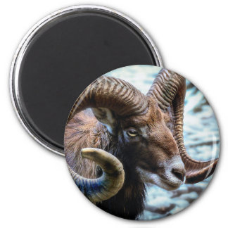 Mammal Nature Animal World Animal Mouflon Magnet