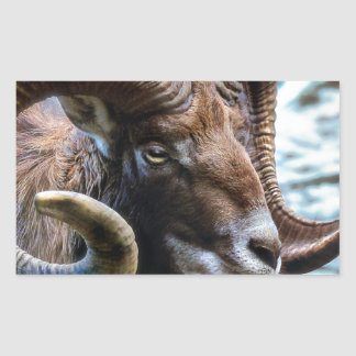 Mammal Nature Animal World Animal Mouflon Sticker
