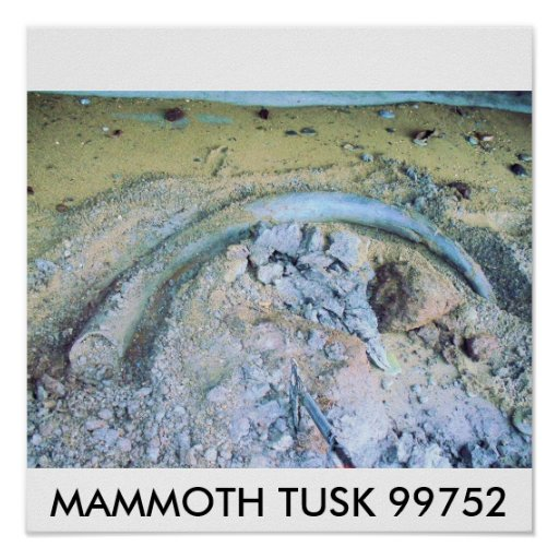 mammoth tusk (2), MAMMOTH TUSK 99752 Print